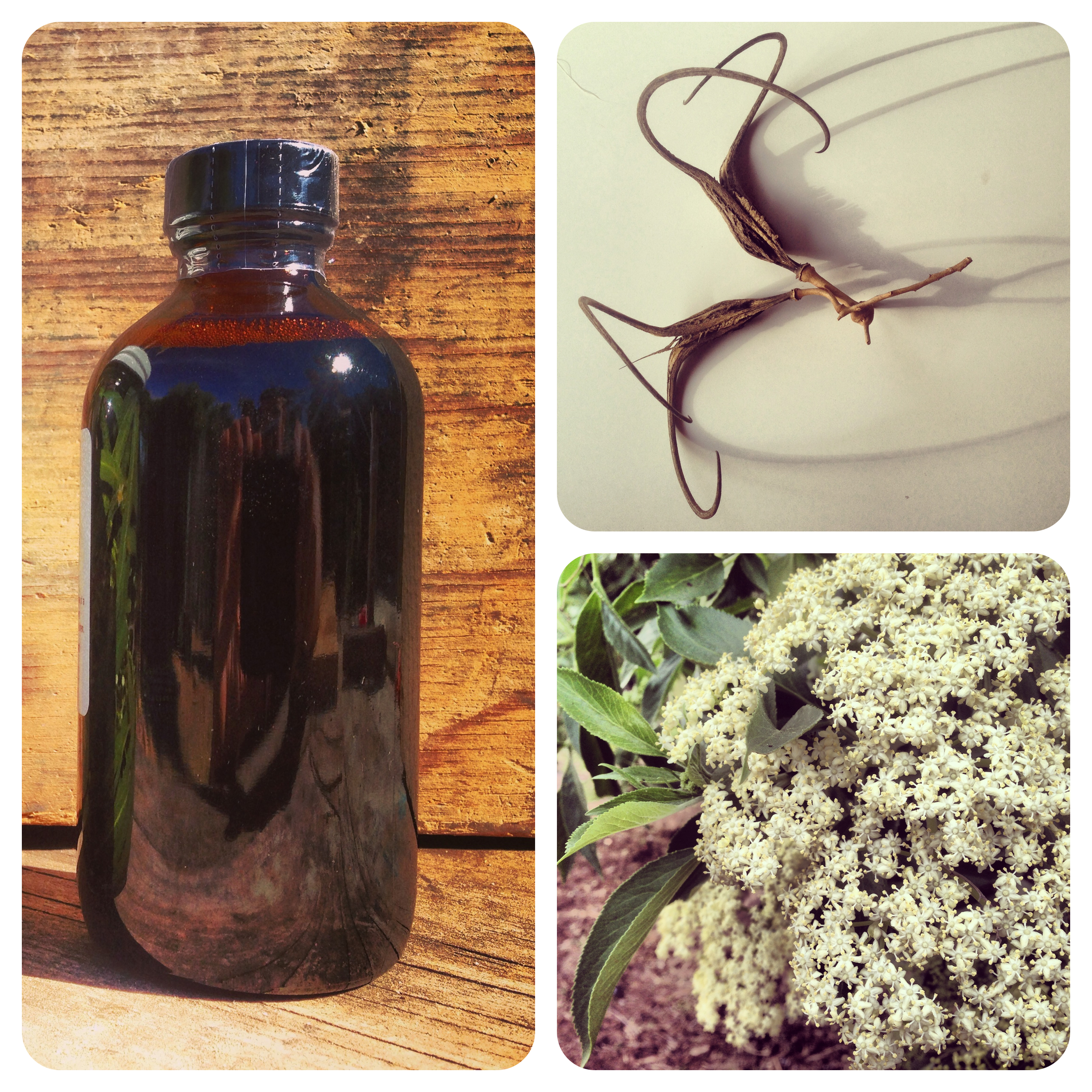 Tinctures and Glycerites