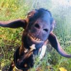 2019 Goat Yoga