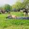 2018 Goat Yoga on the Farm